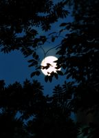 Full Moon over Forest III by KariLiimatainen