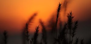 Grasses in the Flames 2 by UnderTheWildMoon