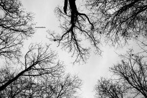 looking up by slownumbers