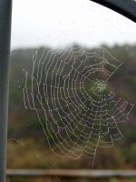 Spider Web by photographyflower