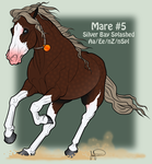 Mustang Mare Adoption 5 by JNFerrigno