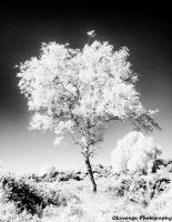 fIRe - Wood Effect - Grainy Tree by Okavanga