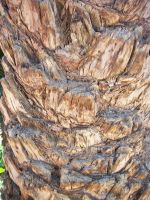Bark palm 5 by jaqx-textures