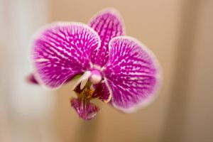 Orchid Lensbaby by LDFranklin