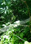 Spiderwebs in the forest 2 by Lum1pallo