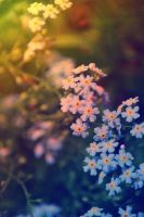 forget me not by lostpickingflowers