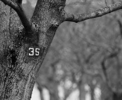 Tree with Street Number by Artelanas