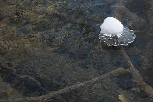 Plitvice: ice queen flower by Ilharess
