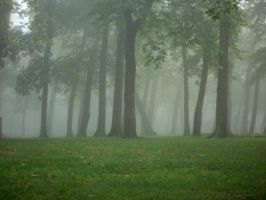 Fog in a Tree Line by Nicolekaedan