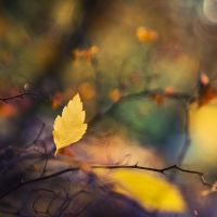 Autumn Leaf by jjuuhhaa