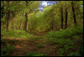 Pathway by FasterThanChris