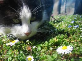 Cat and March Flowers 12 by love1008