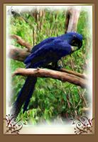 Blue Parrot Painting by Scotsprincess2
