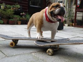 James Hond Skatedog by Sabrina7777