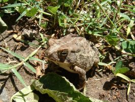 It's a toad. by HunterGreen