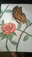 butterfly and rose with background by ccunniffe