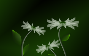 Flowers in 3D by leoatelier