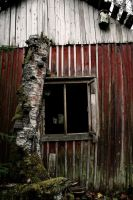 15.10.2014: Dead Birch, Fungus and Abandoned House by Suensyan