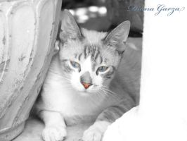 loVE MY CAT by shispis