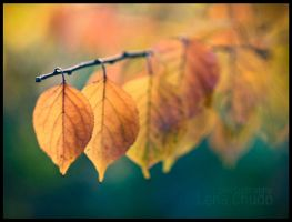 Fall Leaf Colors by ChudoLena