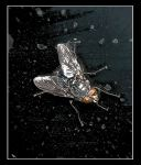 The fly. by jennystokes