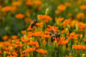 13-08 Busy Bee by evionn