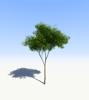tree12.2.6.2 by flow-tess