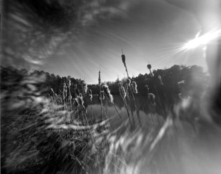 Cattails pinhole by kemosaab