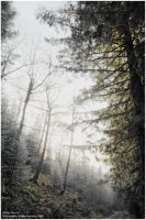 Winter Silence by ERSPhotography