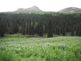Blue Flowers Meadow 3 by prints-of-stock