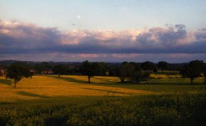 Yellow Fields, Pink Clouds and Moon by Nigel-Kell