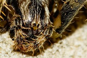 Face of a Spider by kereszteslp