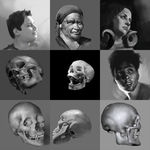 Bust and skull studies by dragon-shark