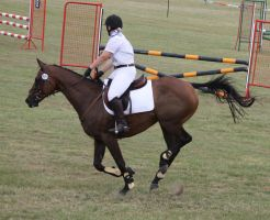 STOCK Showjumping 486 by aussiegal7