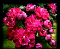 Flowers 1 by WolfPrincess-Stock