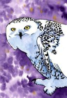 Literary Owls: 2012 Flocking Owls Contest Entry by JMagnus