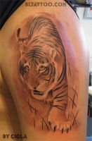 Tiger on arm by cigla