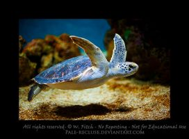 Sea Turtle by Pale-Recluse