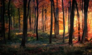 Woodland Golden Dawn by CeriDJones