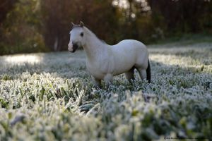 Frosted Morning by KLK-Photography