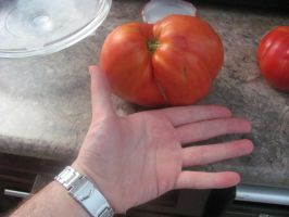 That's a Big Tomato by DragonoftheEastblue