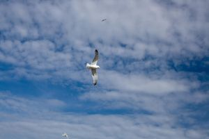 Flying gulls 1 by joannastar-stock