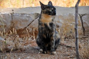 Gigi - The Tortoiseshell Cat by paypouy