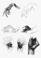 Them hands - Anatomy practice by Daandric