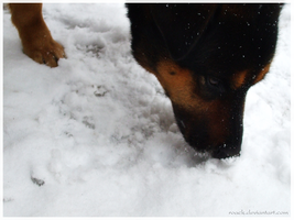 Lick snow by Roack