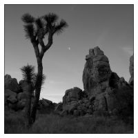 Desert and Rock 03 by aetherum