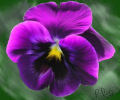 Pansy by Reillyington86