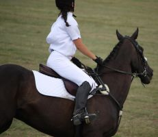 STOCK Showjumping 444 by aussiegal7