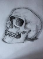 skull by julismith