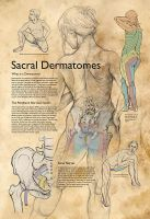 Sacral Dermatomes by ChristieNewman